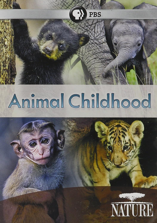 Nature: Animal Childhood