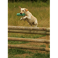 The Gun Dog Training Course