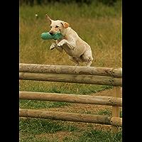 The Gun Dog Training Course (English Edition)