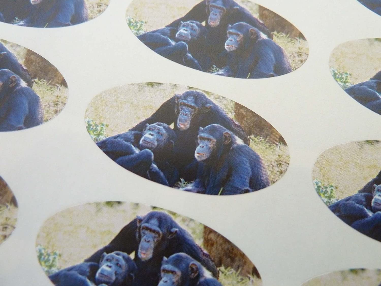 Chimp Stickers for Gift Wrap Cards Envelopes Chimpanzee Oval Seal Labels