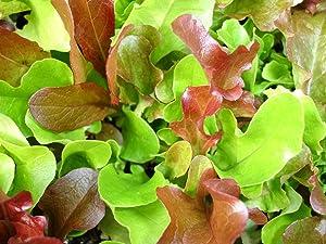 1,000+ Mesclun Lettuce Seeds- Salad Mix- 1,000+ 2020 Seeds