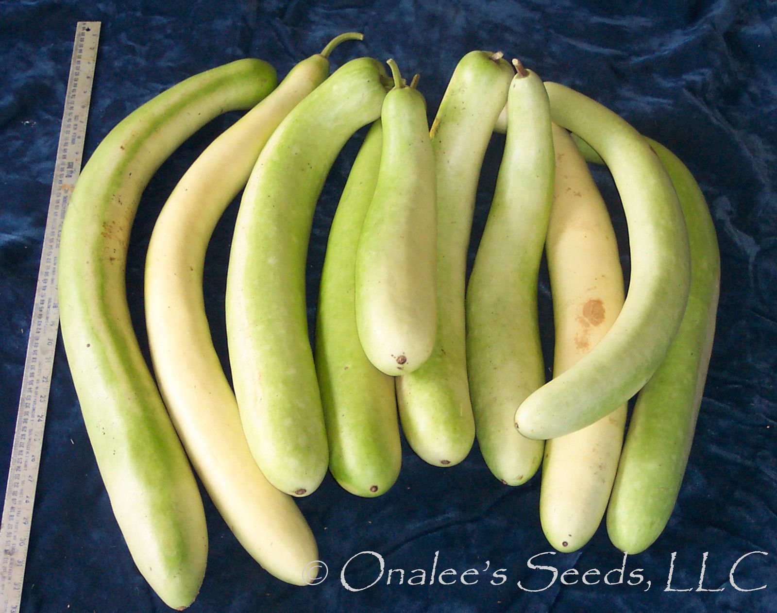 24+ Cucuzzi Seeds-italian Edible Gourd / Italian Squash by onaleei (Image #1)