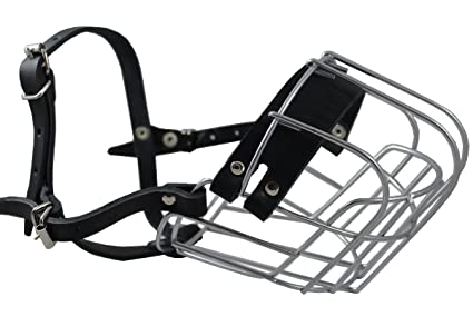 Sport Dog Harness