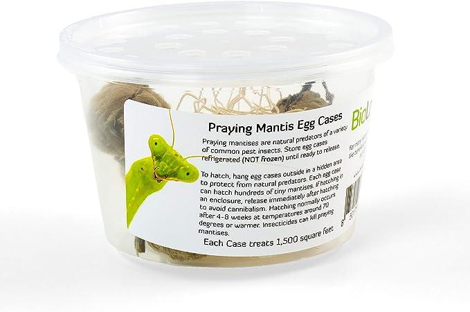 Amazon Com Biologic Company Inc Praying Mantis Egg Cases 2