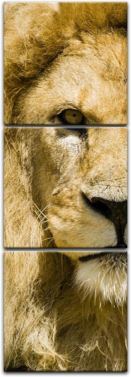 Bilderdepot24 Cuadros en Lienzo león - 30 x 90 cm 3 Piezas - Listo tensa, Directamente Desde el Fabricante: Amazon.es: Hogar