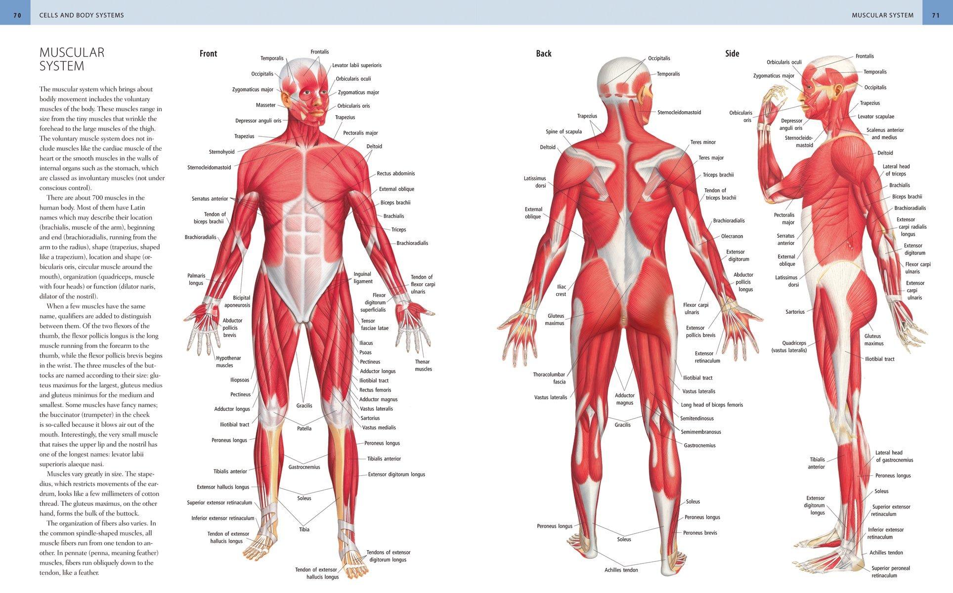 Anatomica: The Complete Home Medical Reference: Ken Ashwell BMedSc ...