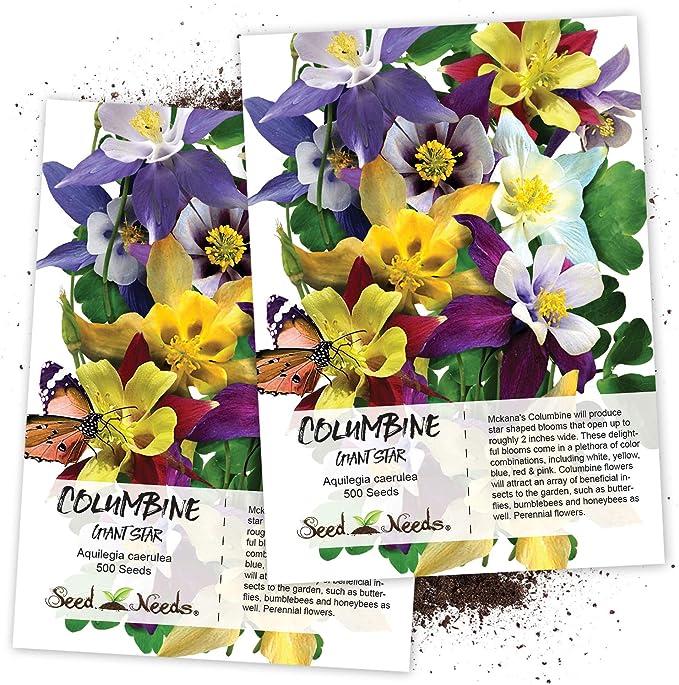 Aquilegia Chrysantha G288 Columbine 10 Seeds Large Aquilegia Yellow