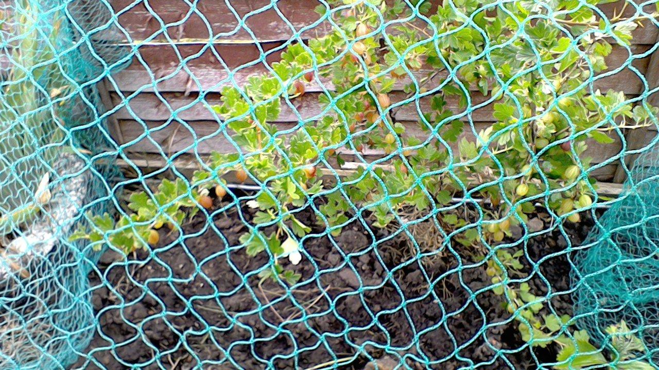 Anti Vogelnetz 2m breit x 100m