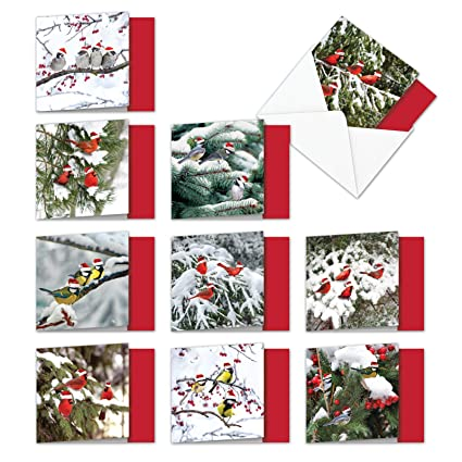 ec8d0a2460396 10 Boxed   Assorted  Christmas for the Birds  Holiday Cards W Envelopes (
