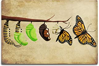 product image for Lantern Press Monarch Butterfly Lifecycle (12x18 Aluminum Wall Sign, Metal Wall Decor Ready to Hang)