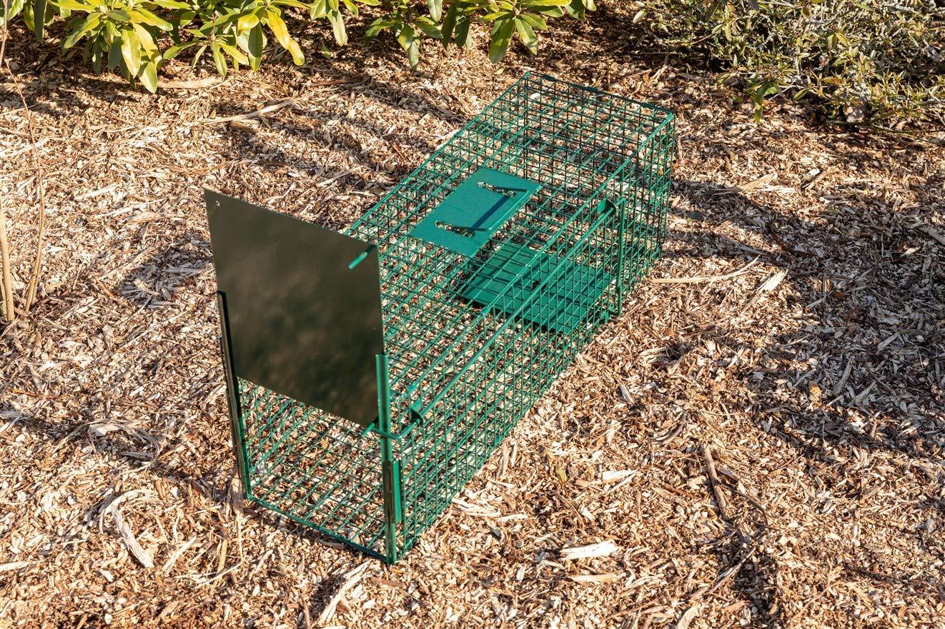 /80/x 25/x 30/cm/ /con Dos entradas /para peque/ños Animales: Conejos Ratas Maxx Trampa de Captura Infaillible/ /Plegable/ roedores/ /Jaula/