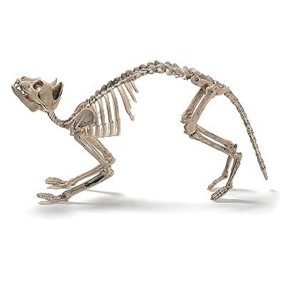 Prextex Cat Skeleton Best Halloween Decoration: Toys & Games