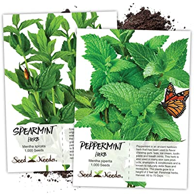 Seed Needs, Non-GMO Mint Garden Seeds for Planting (Includes 2, 000 Seeds Collectively) Spearmint & Peppermint : Garden & Outdoor