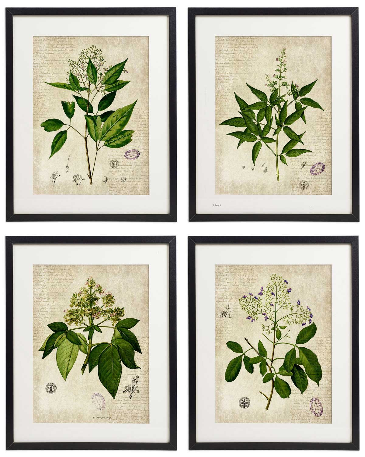 IDIOPIX Vintage Botanical Floral Print Art Home Wall Art Print No.4 Set of 4 Prints UNFRAMED by IDIOPIX
