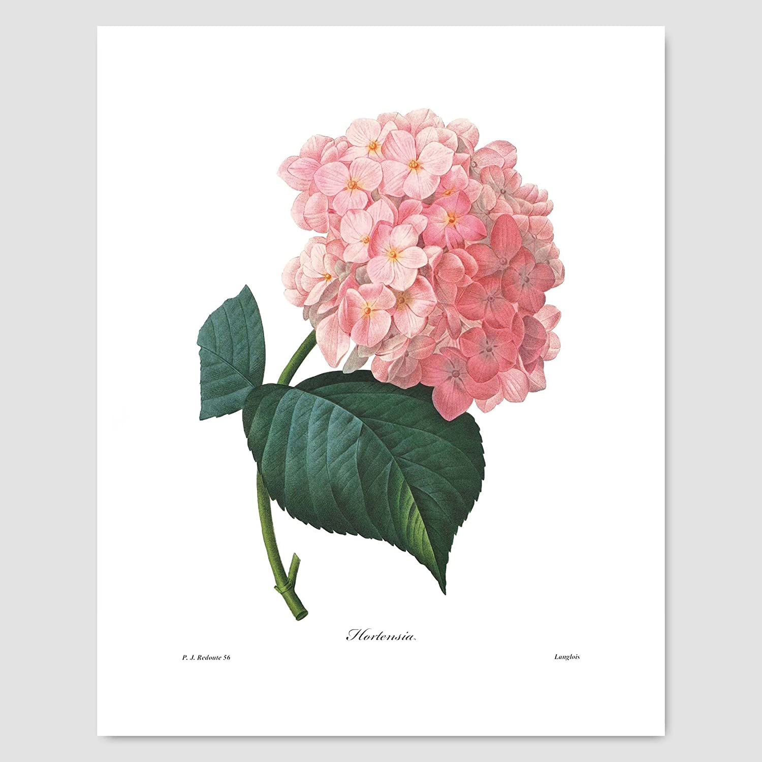 Antique Flowers set of 6 wall hanging Pink hydrangea Botanical reproduction art