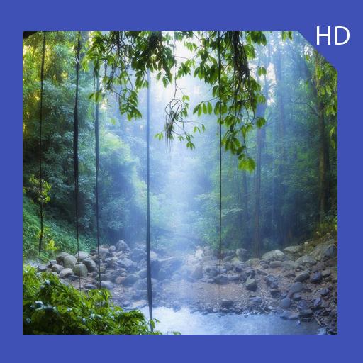 (Rainforest Wallpaper HD Free)