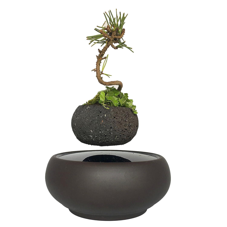 Schwebende Topfpflanze Schwimmende Luft Bonsai Baum Topf Garten Geschenke
