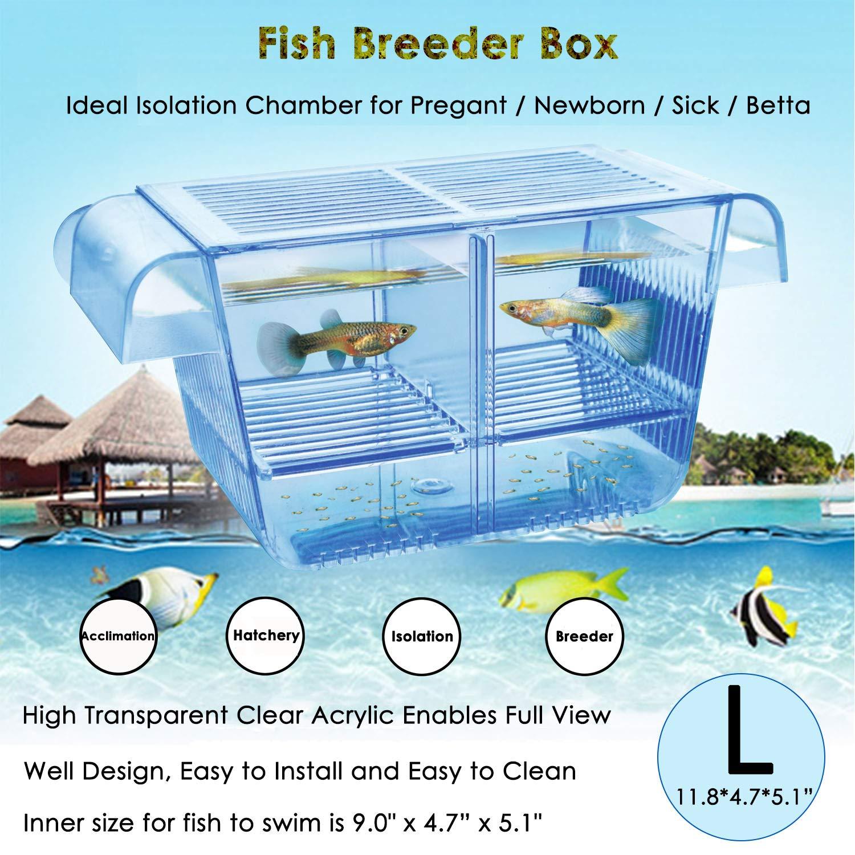 capetsma Fish Breeding Box, Acrylic Fish Isolation Box with Suction Cups, Aquarium Acclimation Hatchery Incubator for Baby Fishes Shrimp Clownfish and Guppy. (L) by capetsma