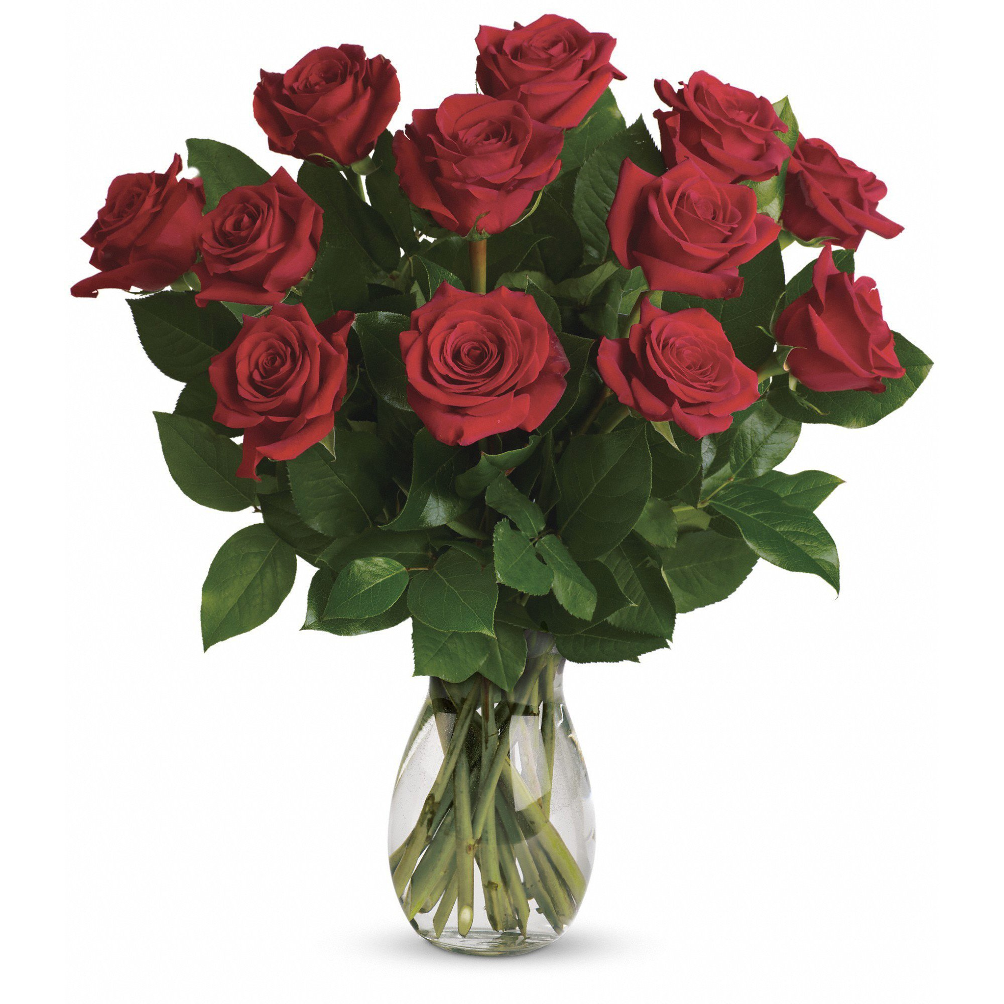 Farm Direct Rose Bouquet of 12 Fresh Cut Roses with Vase (Red)
