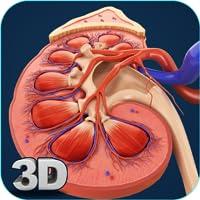 Kidney Anatomy Pro.