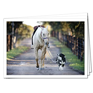 Tysk Design Postkarten Hunde 10 Postkarten Hund Und Pferd Karte