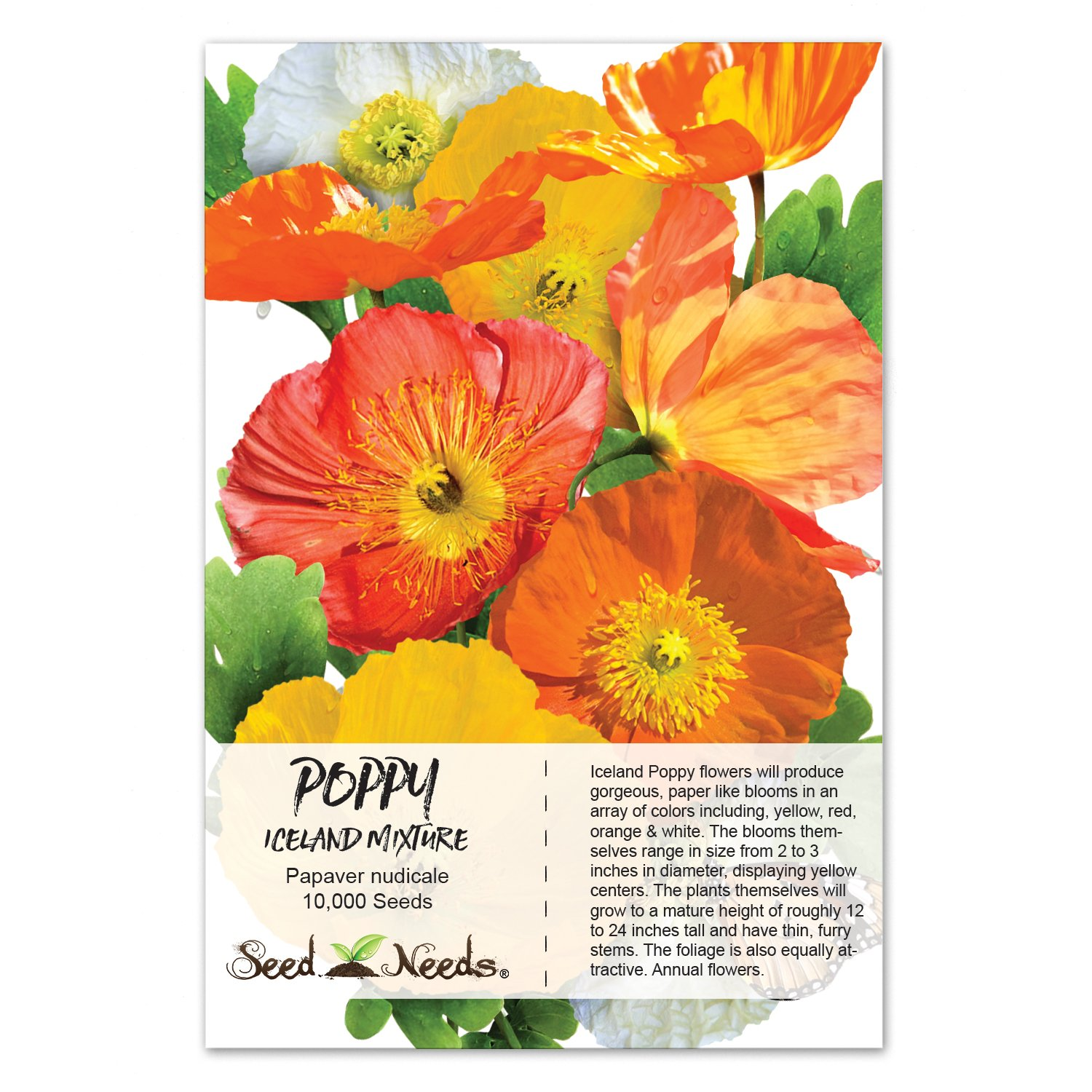 Amazon package of 10 000 flower seeds iceland poppy mixture amazon package of 10 000 flower seeds iceland poppy mixture papaver nudicale non gmo seeds by seed needs poppy plants garden outdoor mightylinksfo