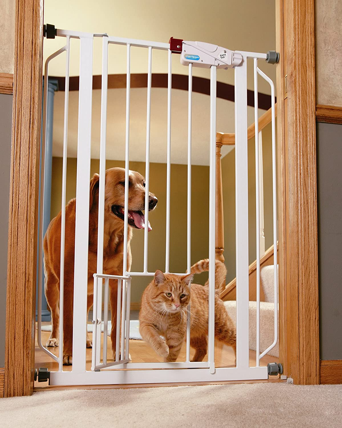 Amazon.com : Carlson Extra Tall Pet Gate, with small pet door ...