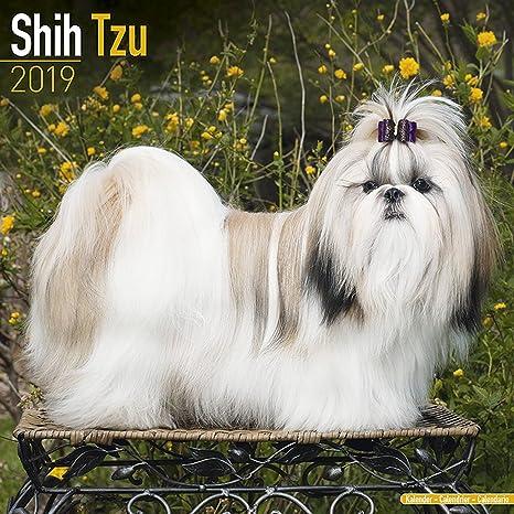 Shih Tzu Calendar Dog Breed Calendars 2018 2019 Wall Calendars