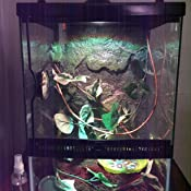 Amazon Com Zilla Tropical Reptile Vertical Starter Kit