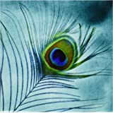 3dRose cst_211236_3 Peacock Feather on Turquoise Background Ceramic Tile Coaster (Set of 4)