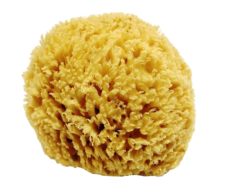 Nido de abeja sin blanquear Mar esponja natural - resistente y duradero - adecuado tanto para niños y adultos, para su uso en el baño, la limpieza, exfoliación y que aplica los cosméticos Givereldi