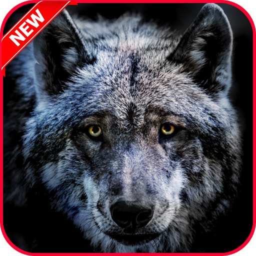 Amazon Com Wolf Wallpaper Hd 4k Free Appstore For Android