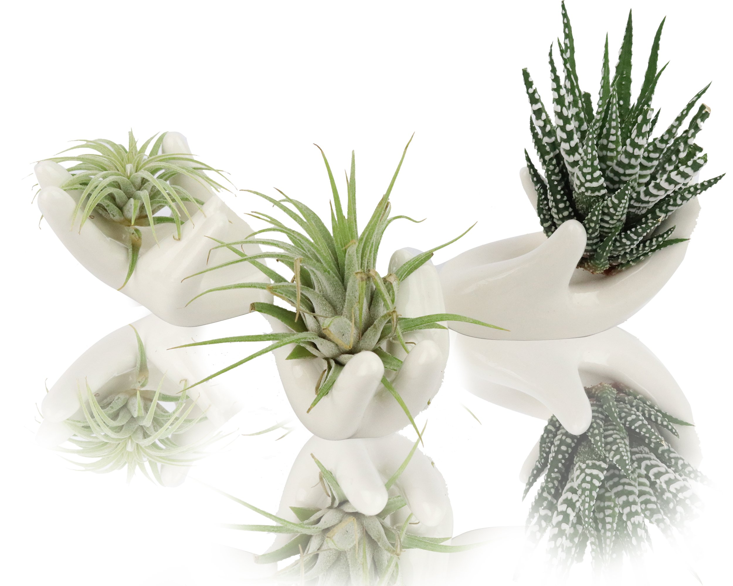 NeutralPure ECO Table Top Flower Pot Tillandsia Air Plant Holder; Multipurpose Ceramic Porcelain Artware Decorator (3 Pcs)