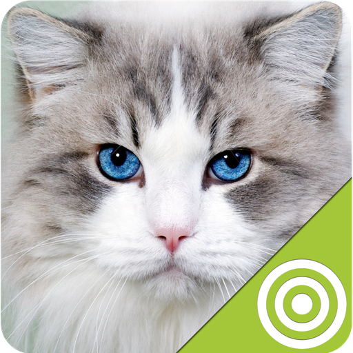 cats targets - 6