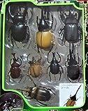 世界のカブト・クワガタ 闘虫コレクション4 カブトムシセット (Aセット) 昆虫 動物 リアルフィギュア