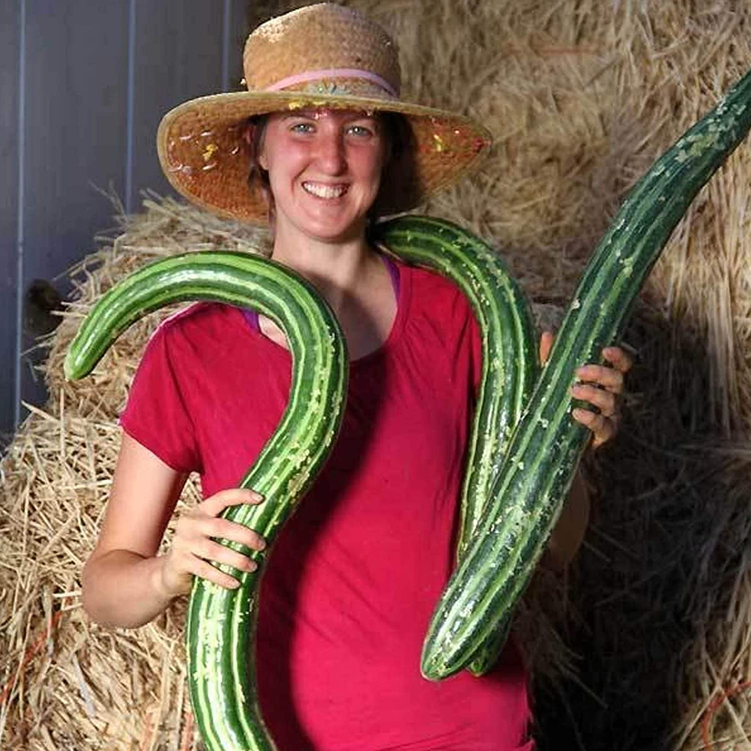 Organic Painted Serpent Cucumber - 1 g ~30 Seeds - Organic, Heirloom, Open Pollinated, Non-GMO, Farm & Vegetable Gardening Seeds