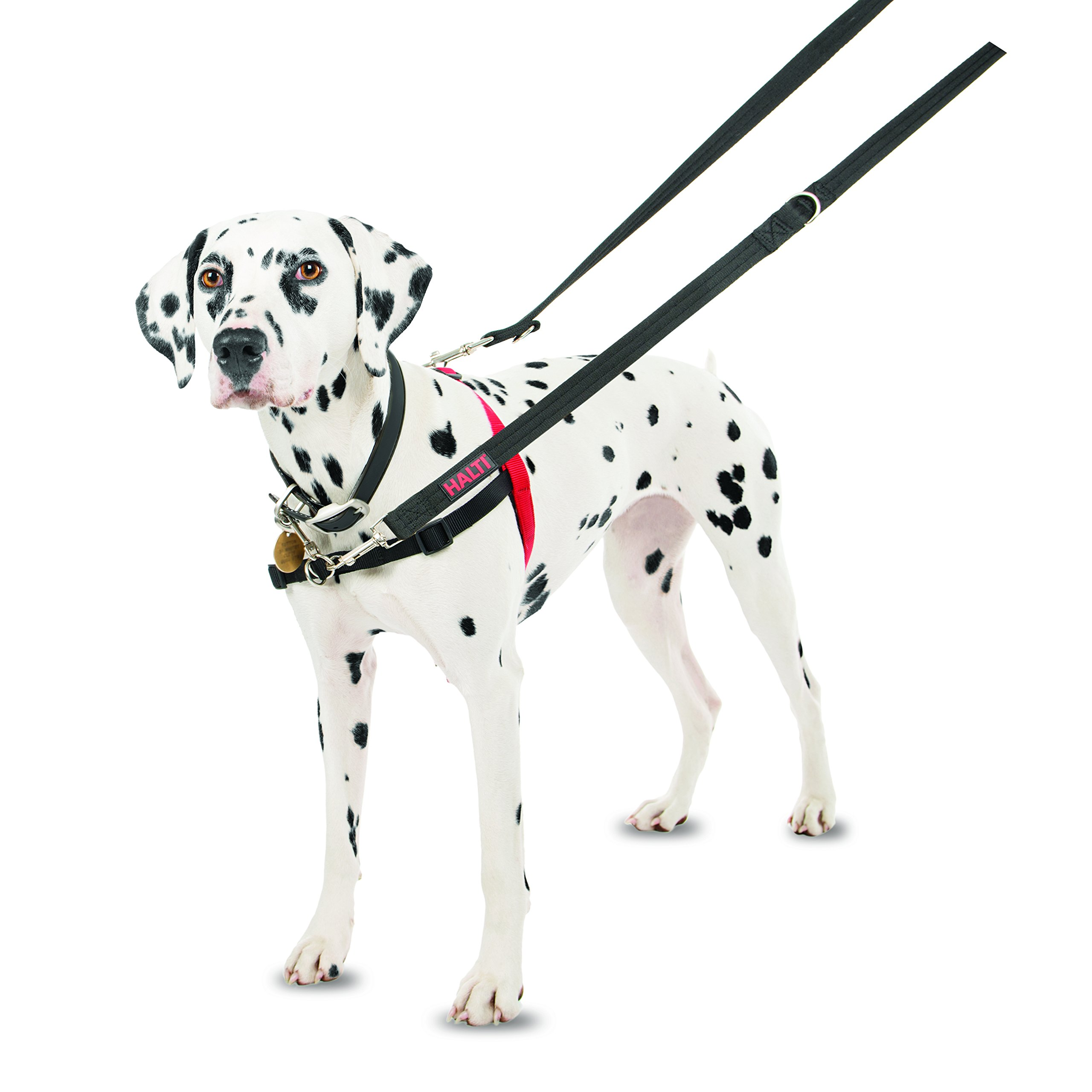 The Company of Animals - HALTI Training Harness - Durable and Adjustable - Comfortable Padded fit - Medium - Black & Red by The Company of Animals (Image #5)