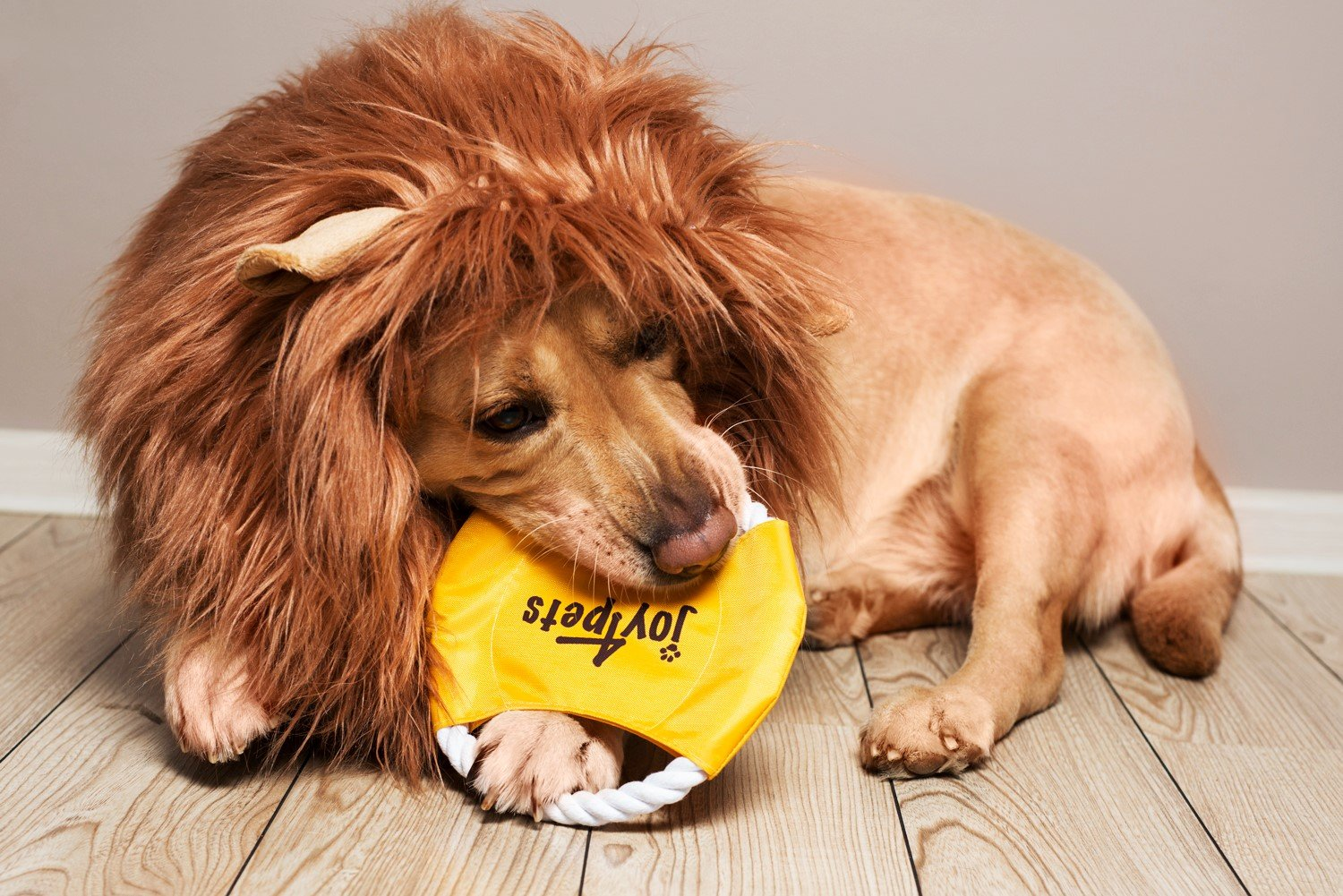 Lion Mane for Dog with Frisbee - Premium Quality, Realistic, Hilarious & Eye Catching Dog Lion Mane - Dog Costume with Ears - Comfortable Lion Wig for Medium and Large Dogs - Perfect Dog Gift by Joy4Pets (Image #4)