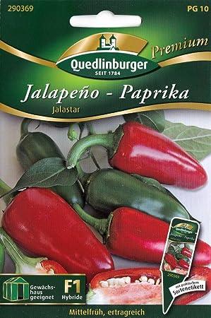 Paprika Jalapeno-Paprika Jalastar Samen