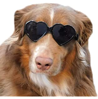 Amazon.com: G006 Dog pet 80s mirror lens sports Sunglasses ...