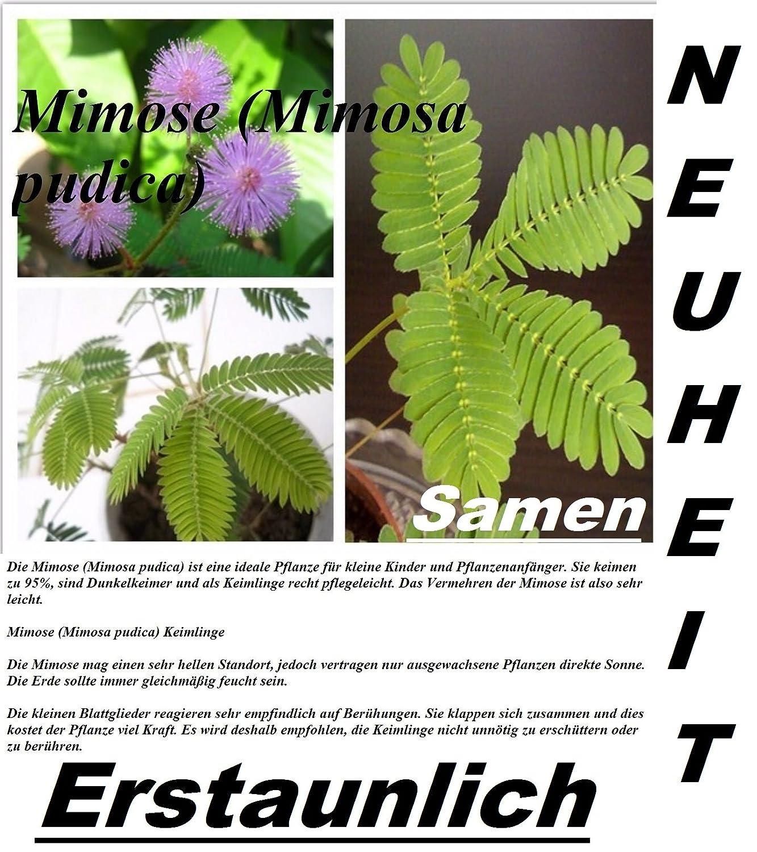 Pflanzen Fr Direkte Sonne. Simple Blhende With Pflanzen Fr Direkte ...