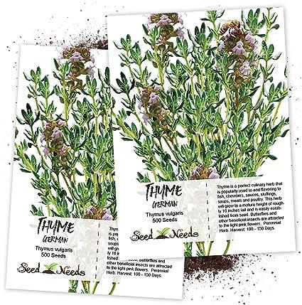 Seeds for grow Thyme 100/% non GMO Medicinal herb