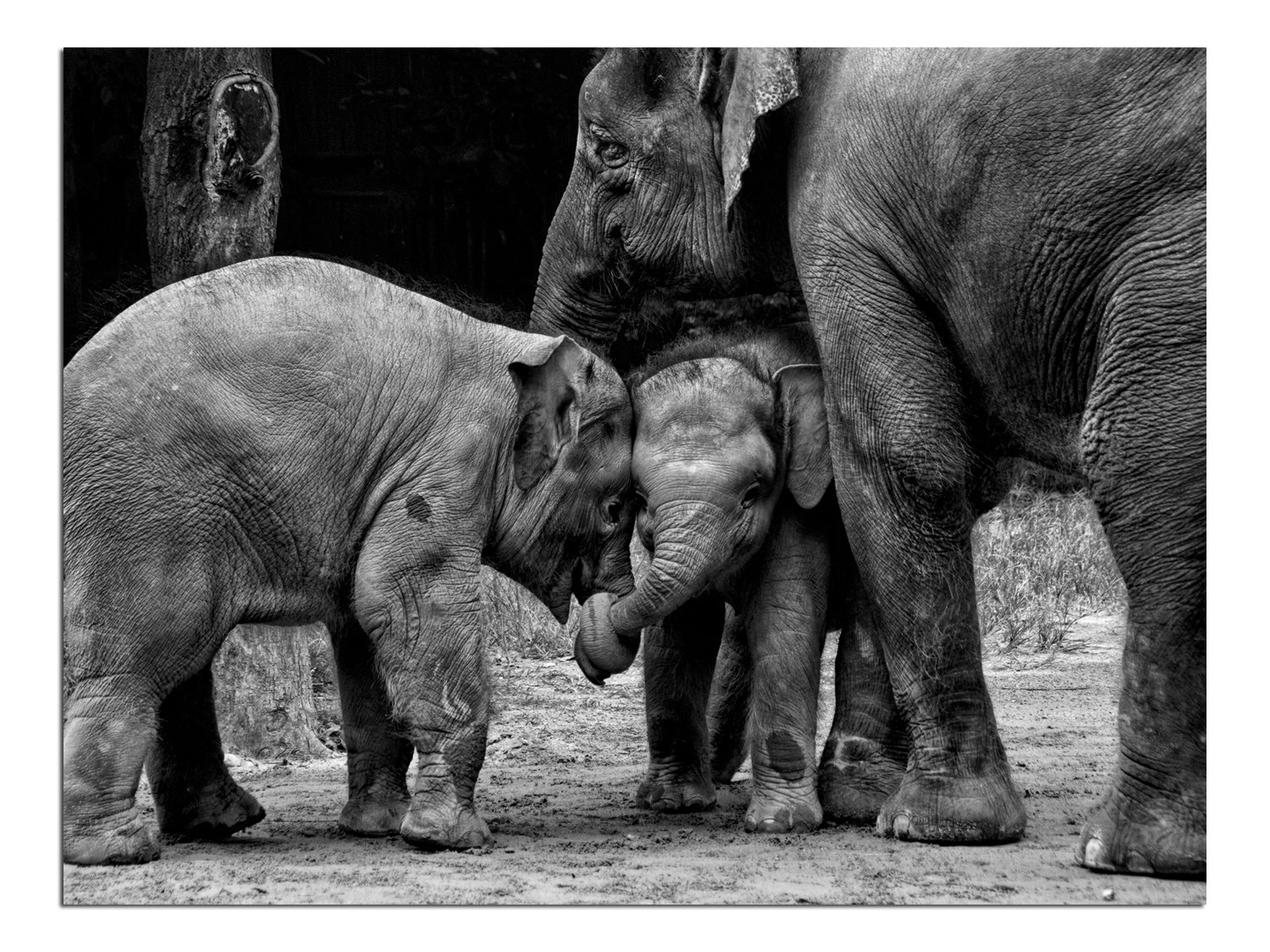 JP London Solvent Free Print PAPL1X441808 Friends Forever Elephant Love Hug Family Ready to Frame Poster Wall Art 40 h by 30 w