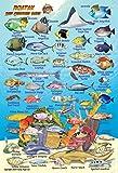 Roatan Bay Islands Honduras Reef Creatures Guide