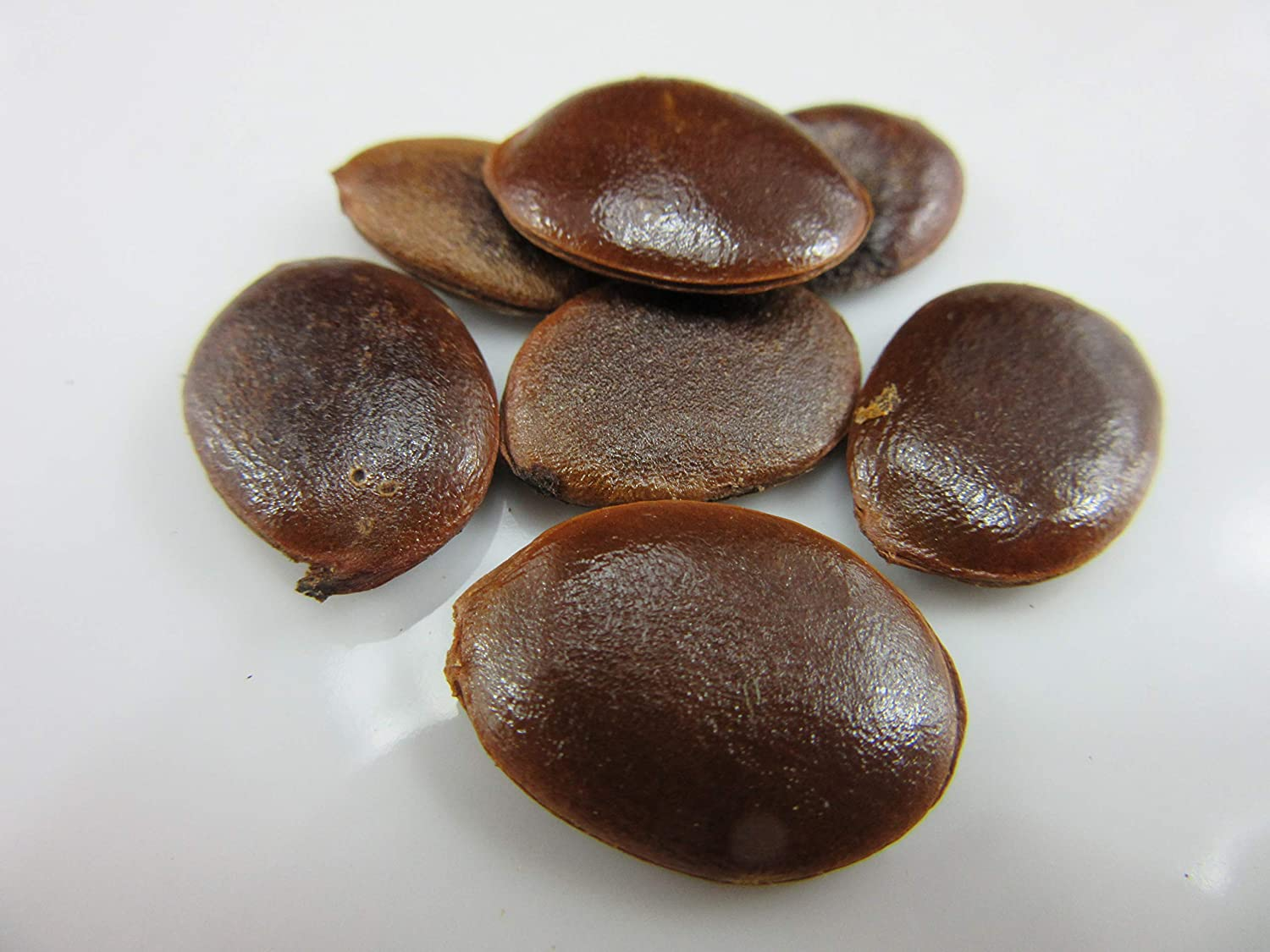 American Persimmon (Diospyros virginiana) Seeds by Robsrareandgiantseeds UPC0764425785866 Non-GMO,Organic,1010-A Package of 4 Seeds