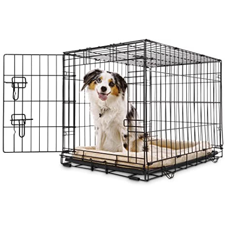 Amazon Com Petco Classic 1 Door Dog Crate 30 L X 19 W X 21 H