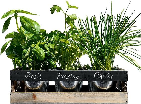 Viridescent Jardín de Hierbas Interior Caja de Madera Jardinera para alfeizar de Cocina - El Kit Contiene Todo lo Que Necesita para Cultivar Sus propias Hierbas Frescas: Amazon.es: Jardín