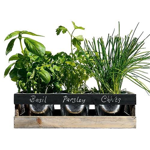 Viridescent Indoor Herb Garden Kit   Kitchen Wooden Windowsill Planter Box  With Herb Seeds. Best