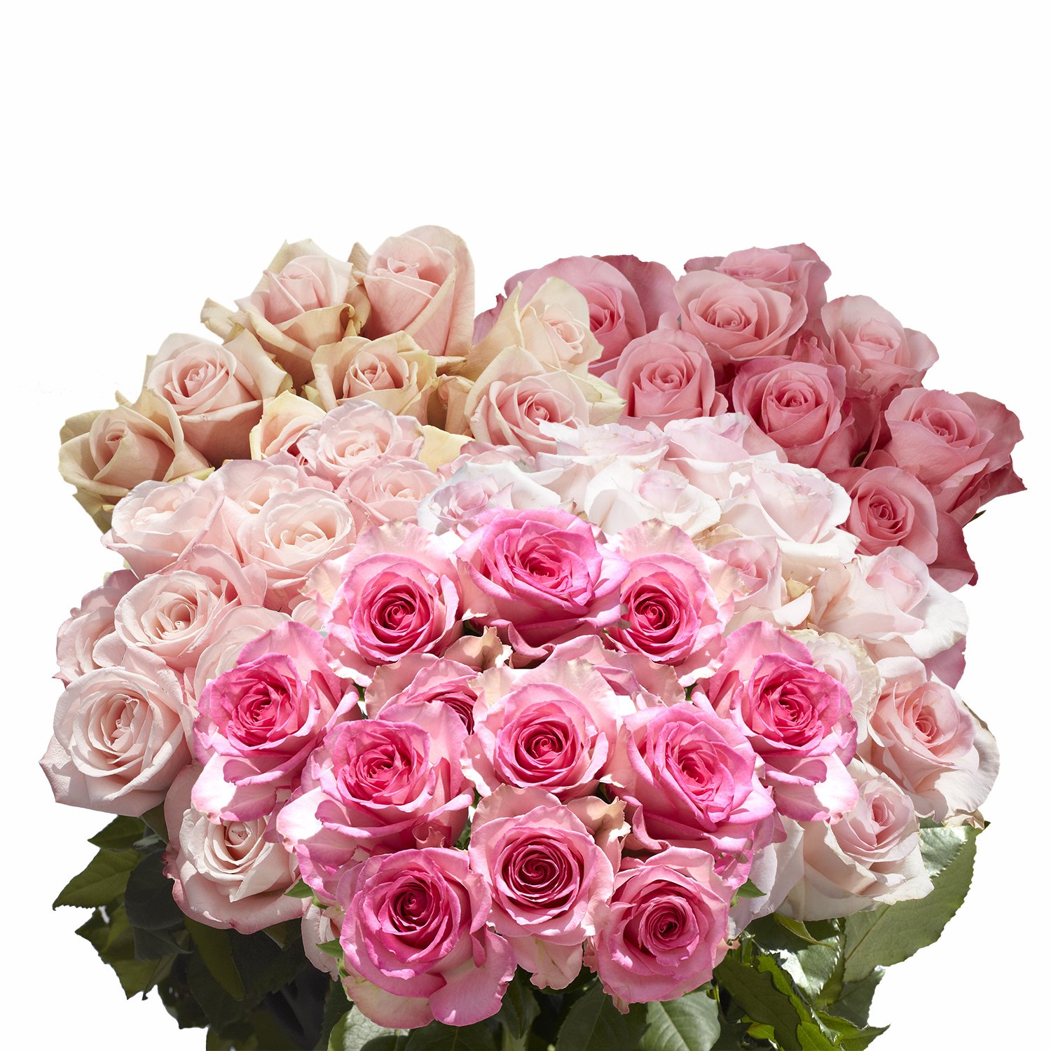 GlobalRose 100 Pink Roses- Exciting Fresh Flowers- Express Delivery