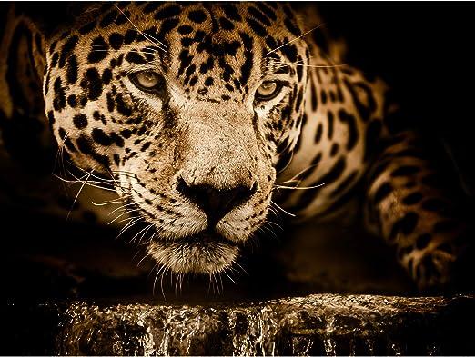 Jaguar Head Big Cat Large Canvas Wall Art Print